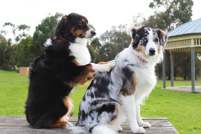 Masáže pro psy