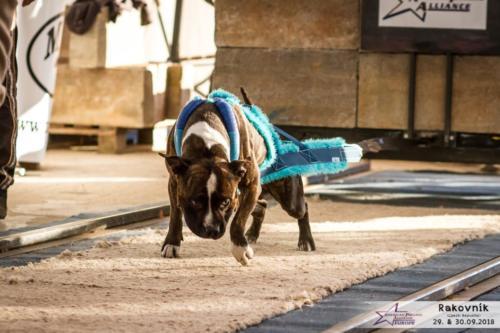 bull-sporty-1