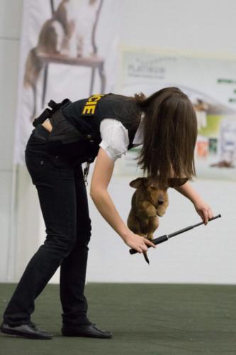 dogdancing-3