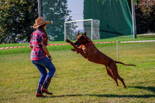 dogdancing-5