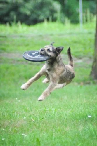 dogfrisbee-2